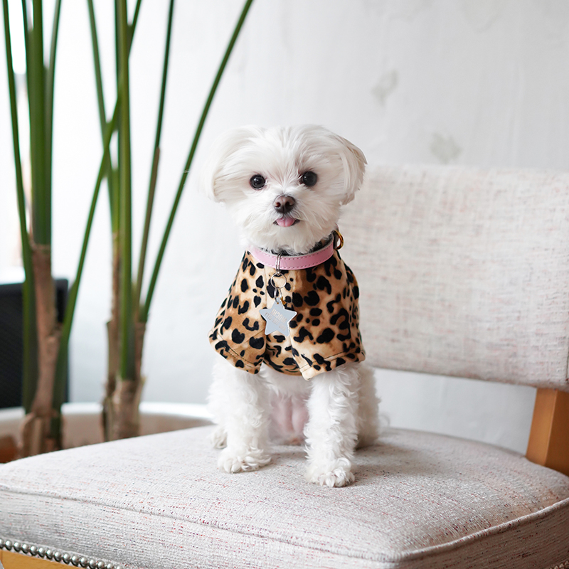 Mochi and the City - leopard dog shirt