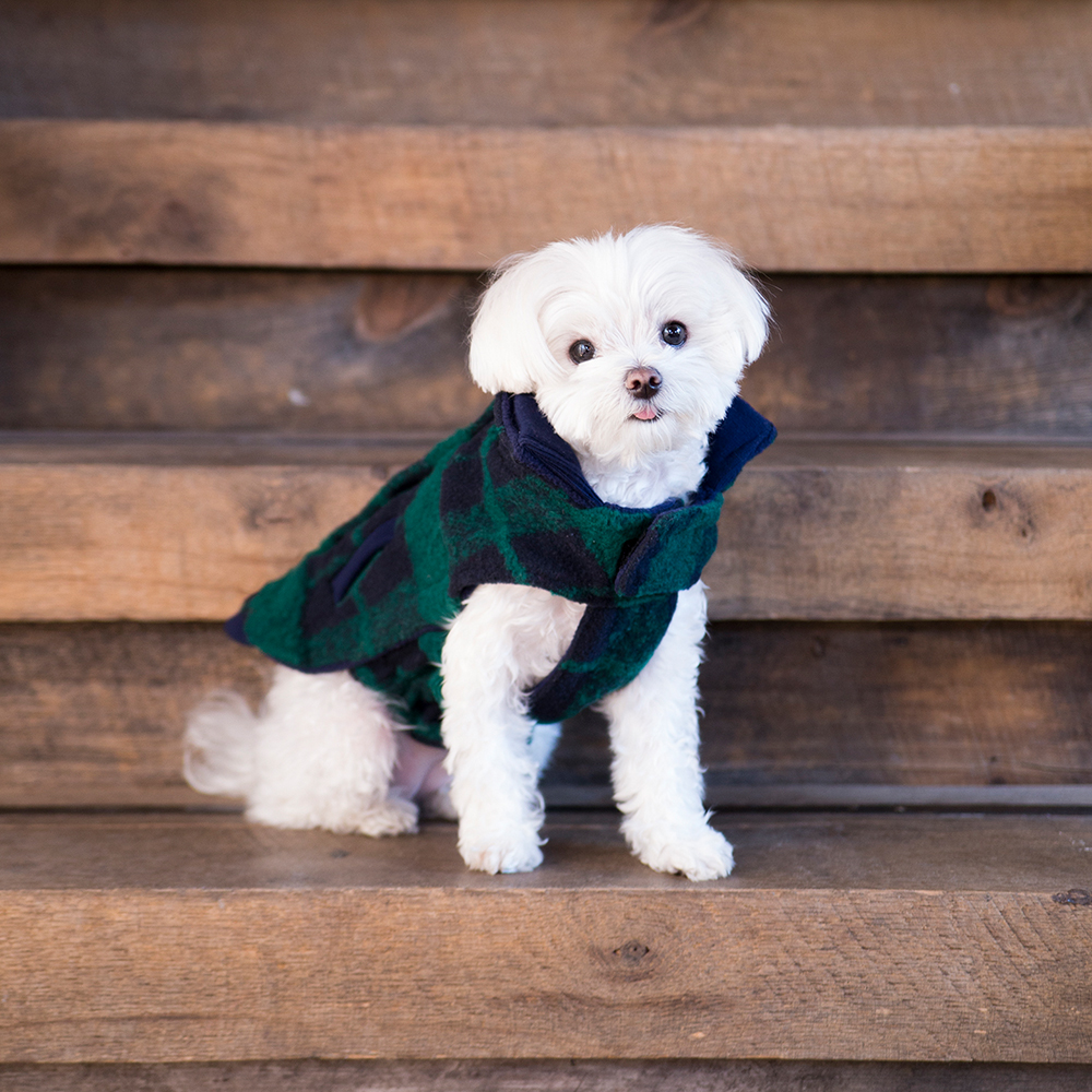 Mochi and the City - plaid fleece jacket