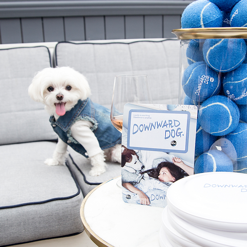 Mochi and the City - Famous Instagram Dog - ABC Downward Dog Premiere Event