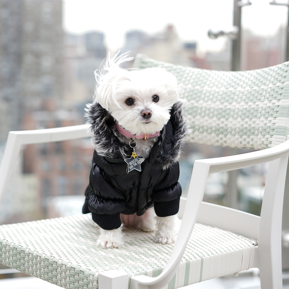 Mochi and the City - winter in New York