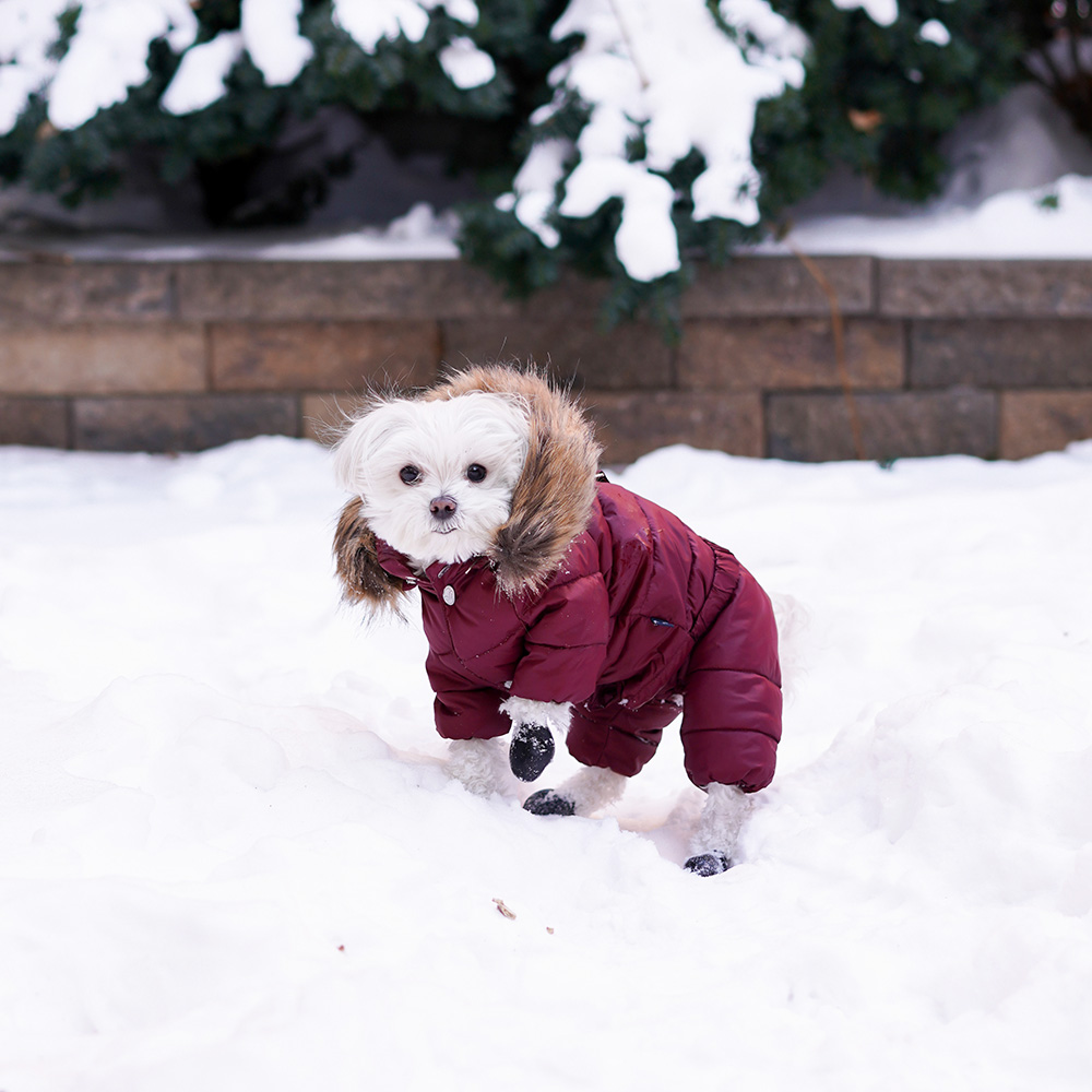 Mochi and the City- full body dog snowsuit