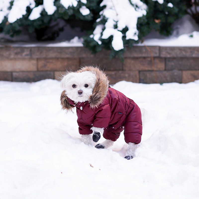 Mochi and the City Snowsuit