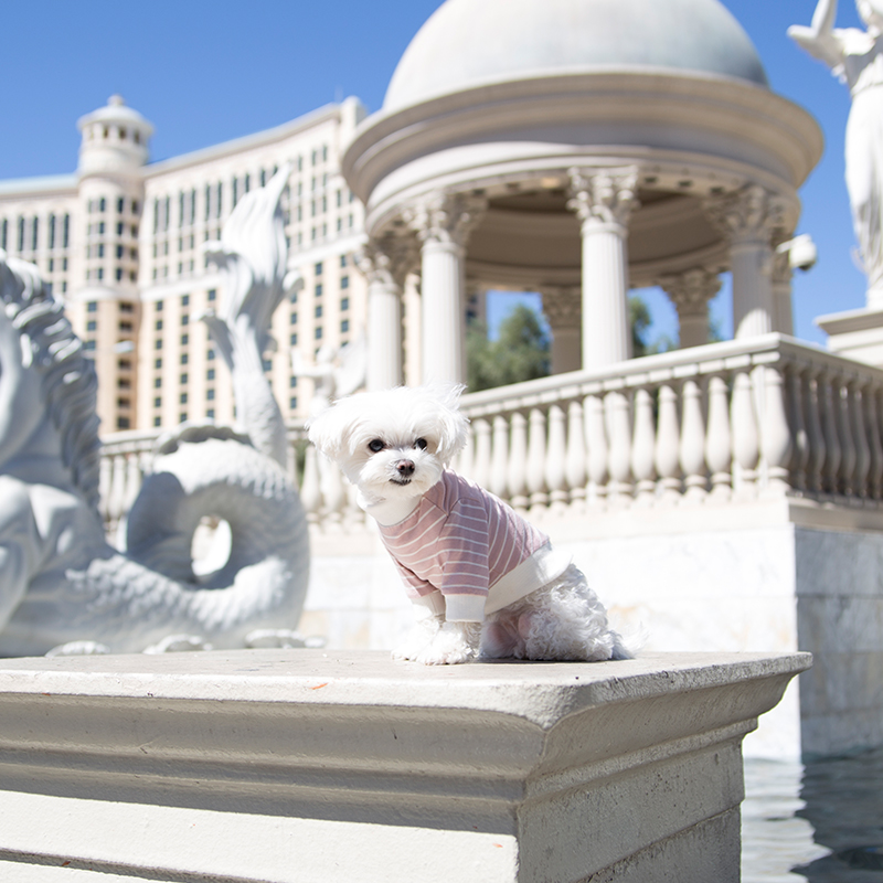 Mochi and the City - Las Vegas