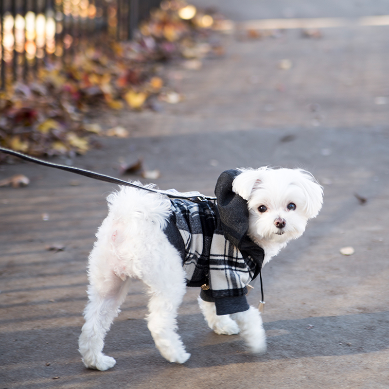 Mochi and the City - Dog Fashion Model