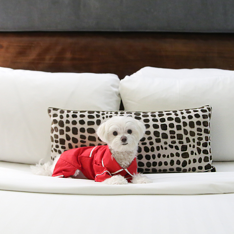Mochi and the City - Hotel 48LEX - dog friendly hotel NYC