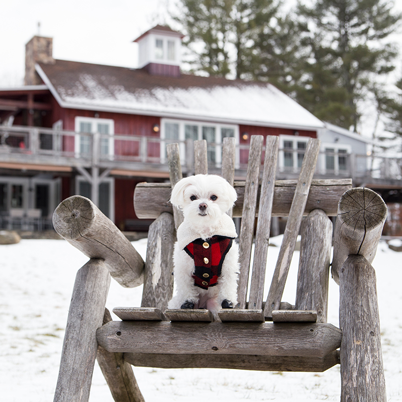 Mochi Travel Diaries: Glamping with Pets in Upstate NY