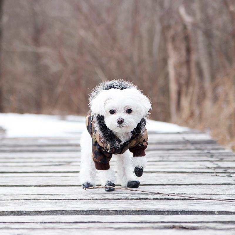 Mochi Fashion Diaries: Best Winter Outerwear for Stylish Dogs