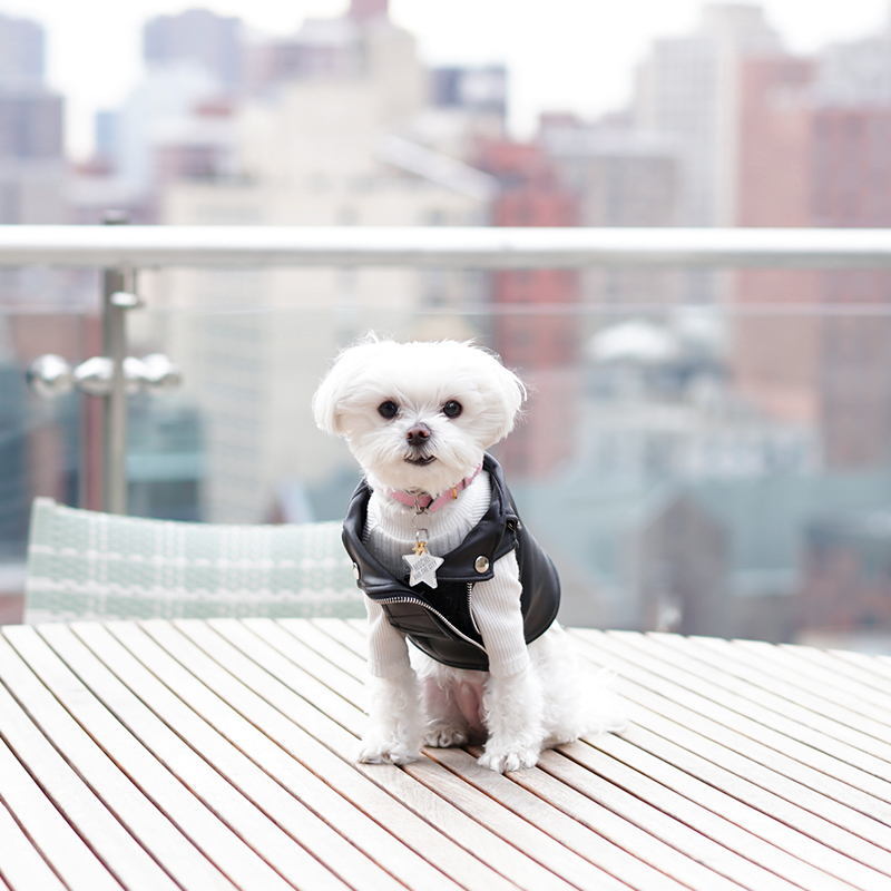 Mochi and the City - faux leather dog vest