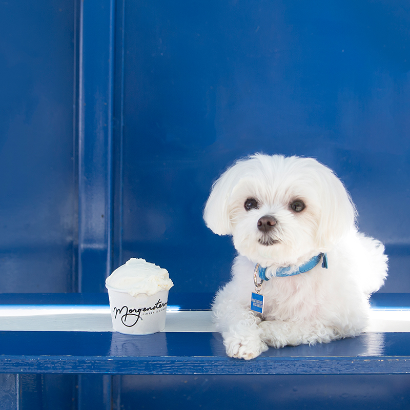 Mochi and the City - Instagram Famous Dog - American Express Ambassador