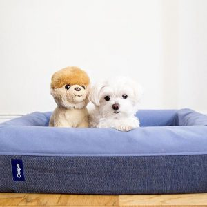 Mochi and the City - Famous Instagram Dog - Casper Dog Bed