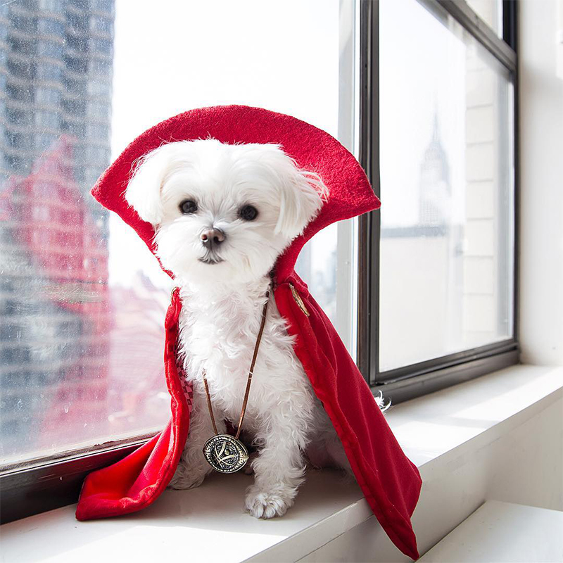 Mochi and the City - Instagram Famous Dog - Disney Dr. Strange