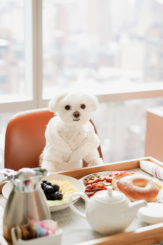 Mochi and the City - Mondrian Park Avenue Room Service