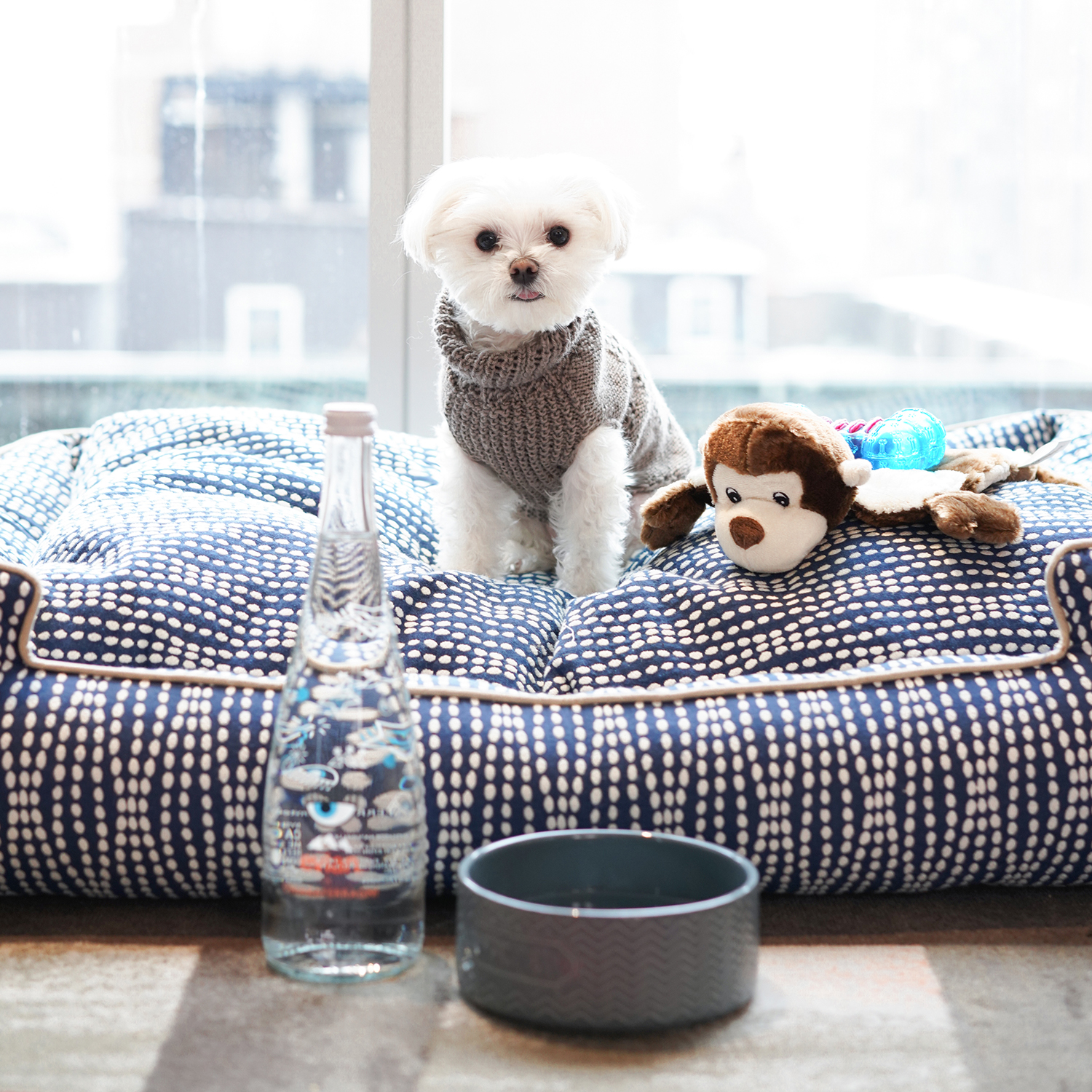 Mochi and the City - Mondrian Park Avenue dog-friendly