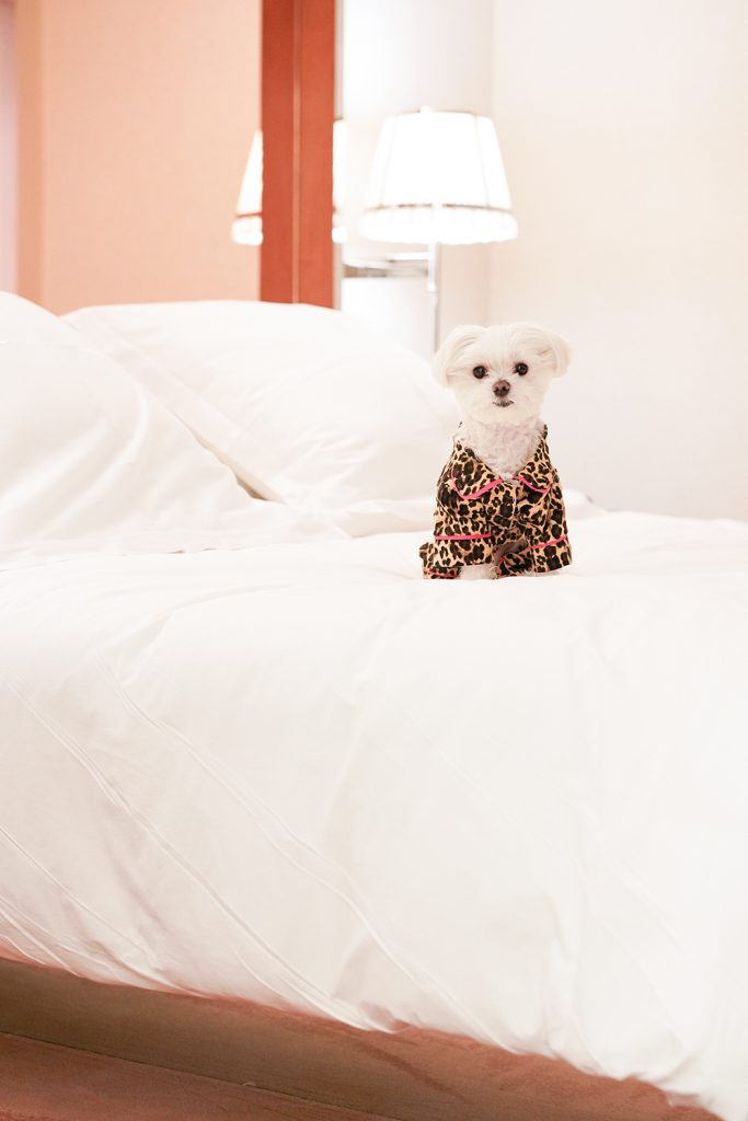 Mochi and the City - Mondrian Park Ave - dog pjs