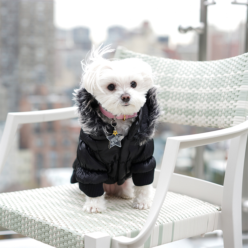Mochi and the City - winter parka