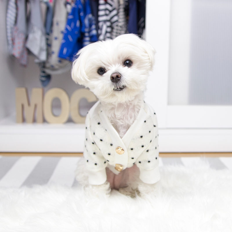 Mochi and the City - Instagram Dog Model Closet