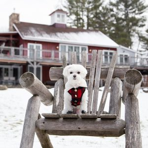 Mochi and the City - luxury dog-friendly barn in the Catskills