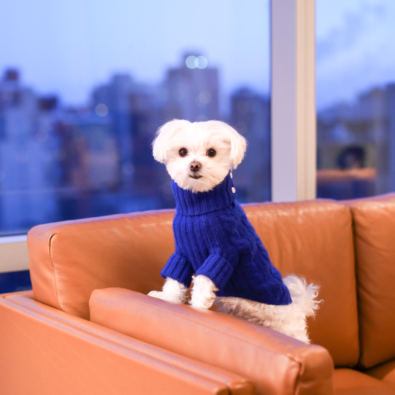 Mochi and the City - Mondrian Park Avenue Dog Friendly Hotel
