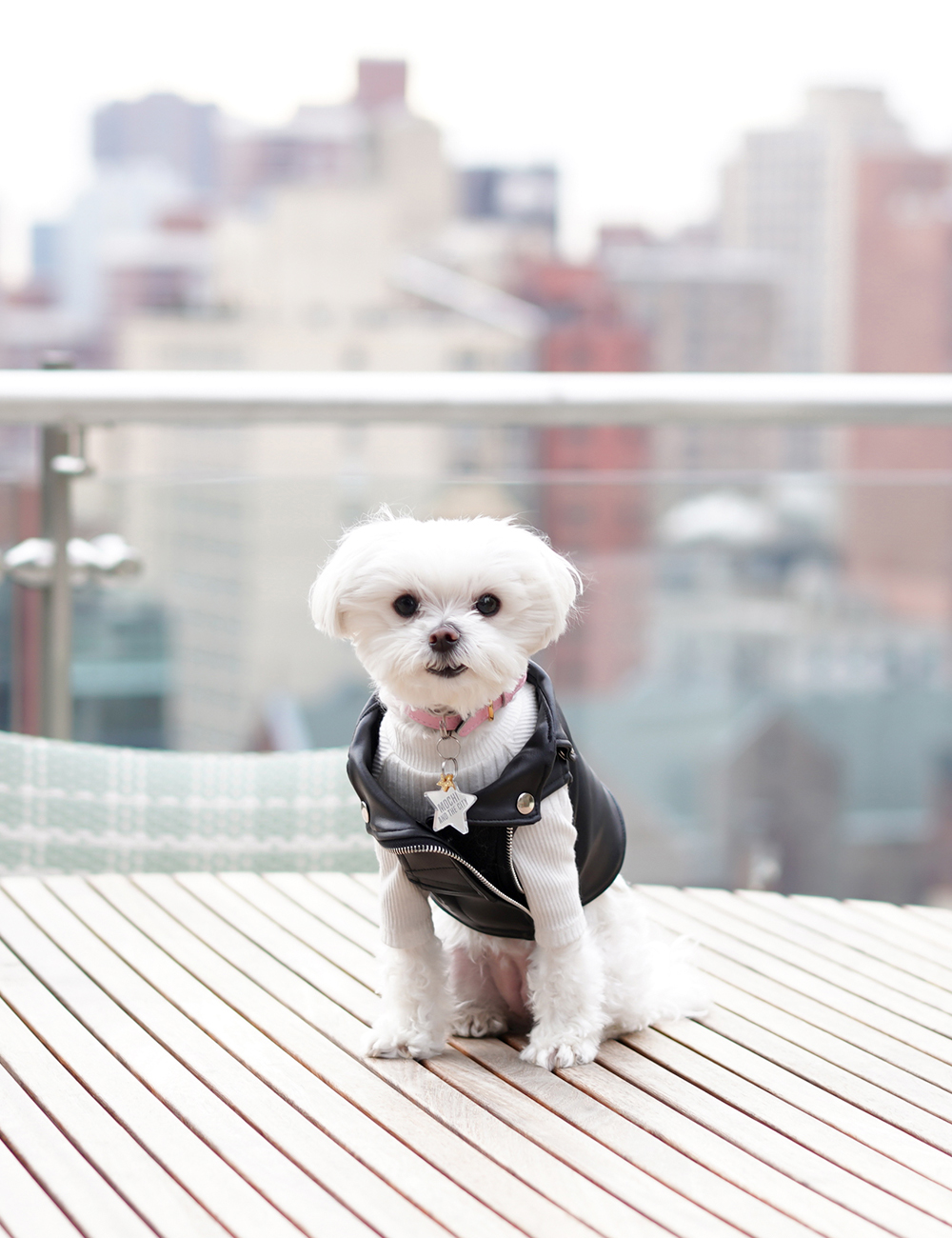 Best Dog Hotels Nyc