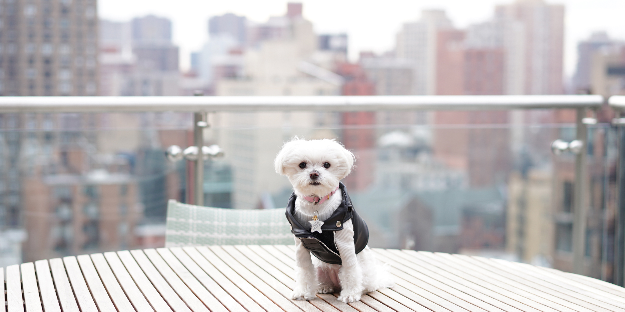 Mochi and the City - Mondrian Park Avenue skyline