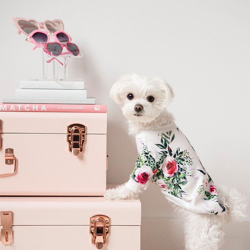 Mochiandthecity Instagram Dog Model Floral Shirt