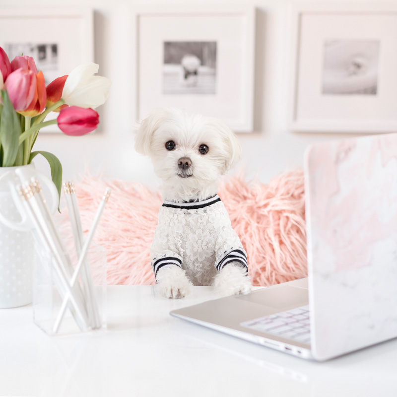 Mochiandthecity Instagram Dog Chic Office