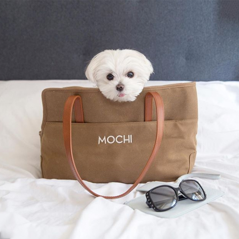 @mochiandthecity Instagram dog model