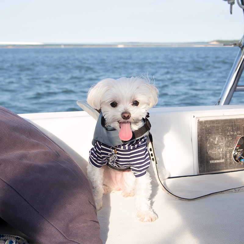 @mochiandthecity Sea Escapes Sag Harbor sailing trip
