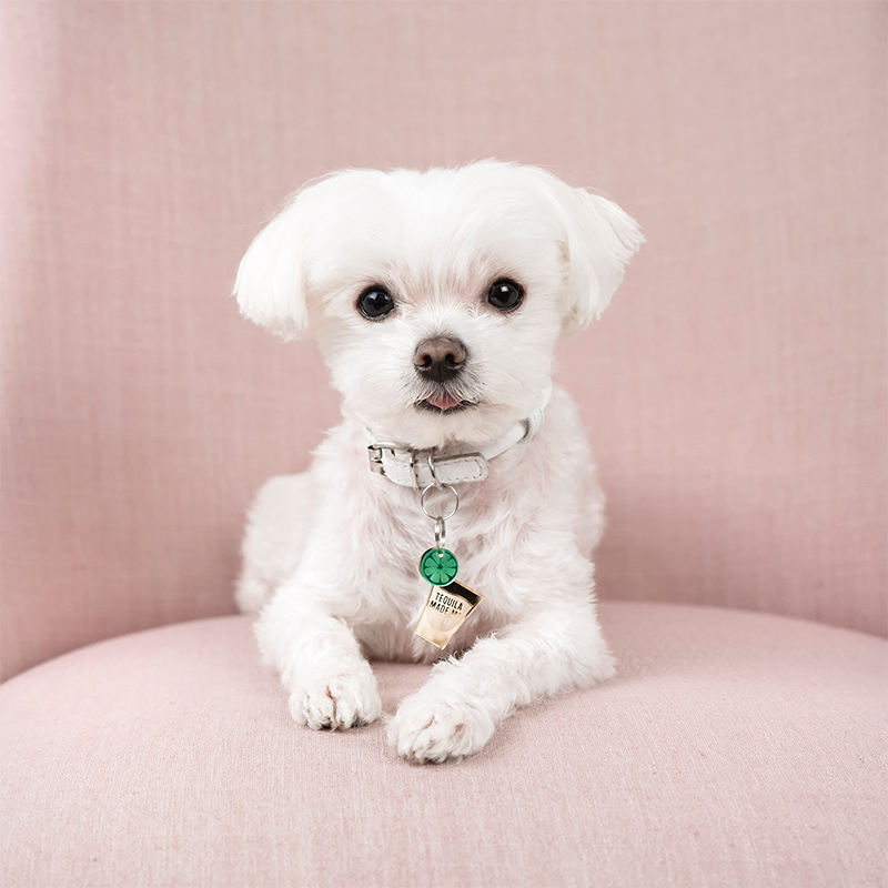 @Mochiandthecity Instagram dog accessories